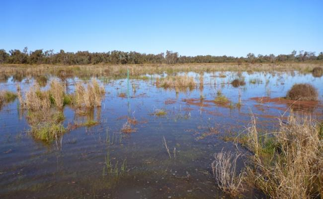 Macquarie Marsh