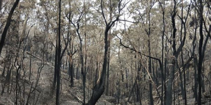 Burnt gully
